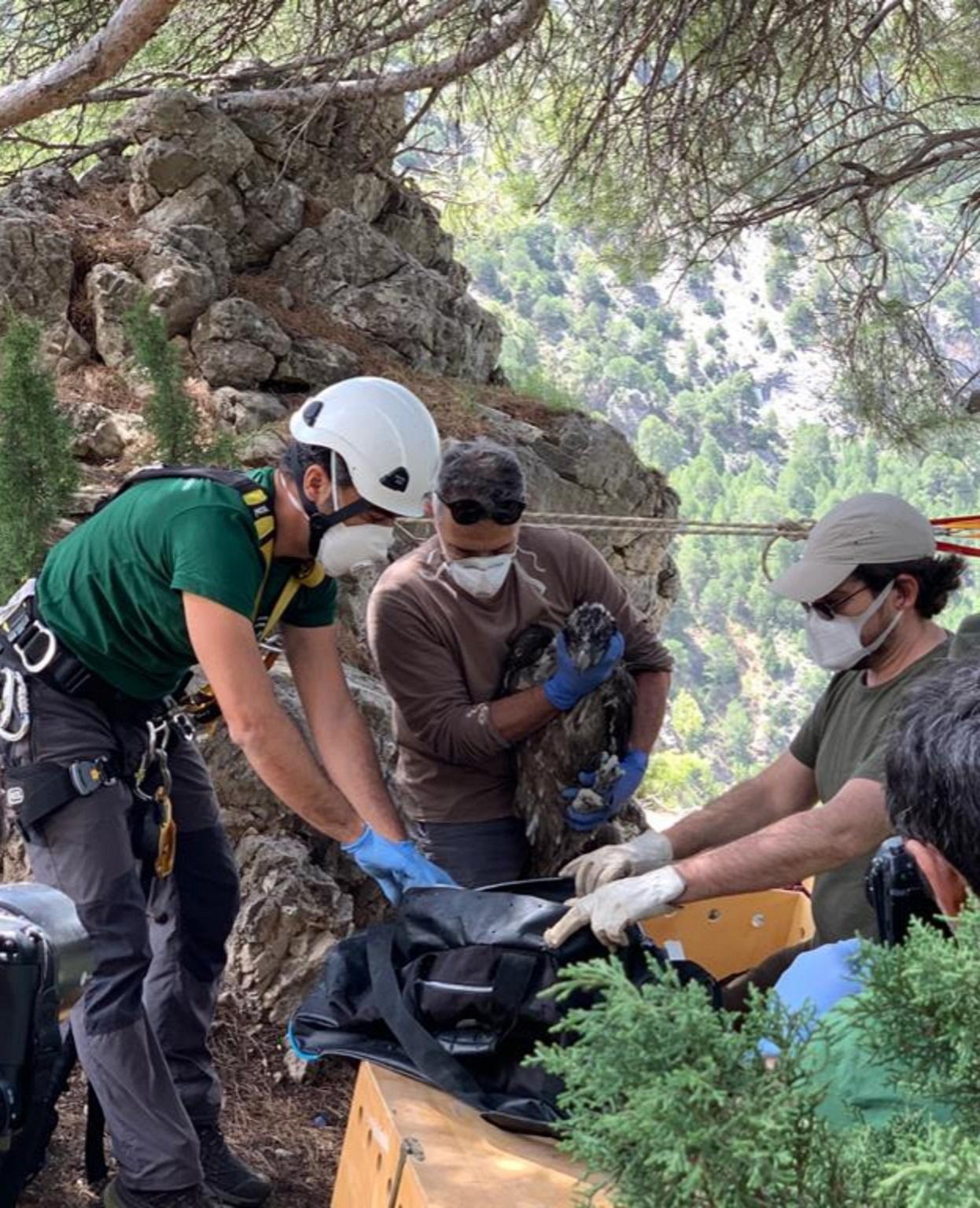 Liberados dos quebrantahuesos en la Sierra de Castril