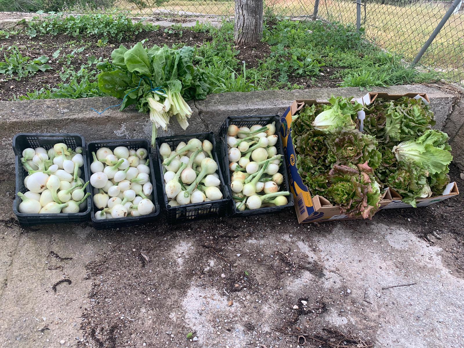 Un colegio de La Zubia dona las hortalizas de su huerto escolar a personas en situación de vulnerabilidad