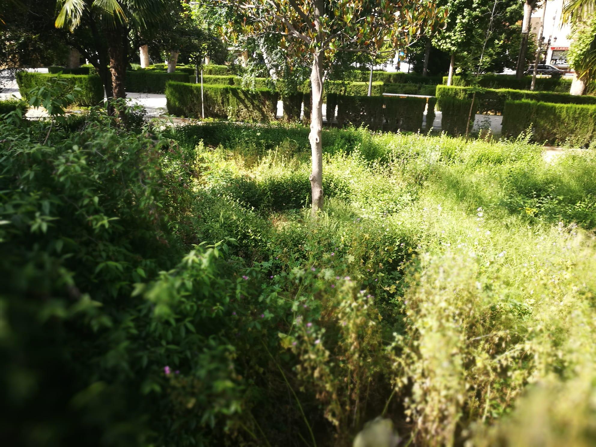 El PSOE de Guadix se lamenta del deterioro y dejadez de parques, jardines y ramblas urbanas