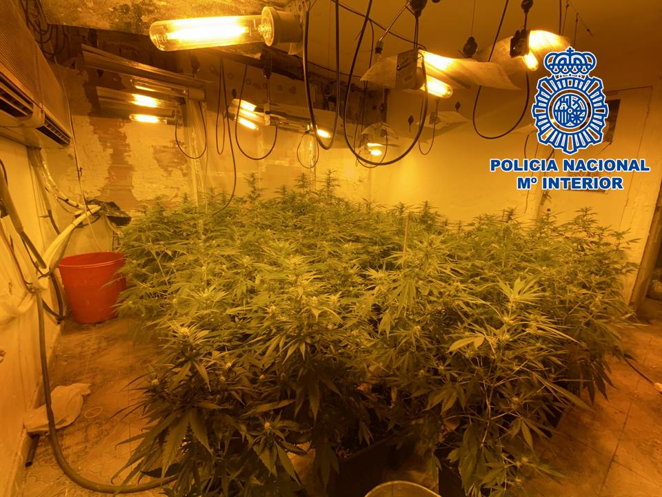 Detenidos los propietarios de una «factoría de cannabis» en barrio del puerto de Motril