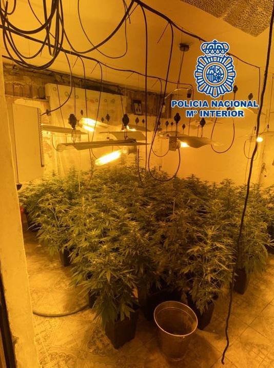 30 detenciones y 2.300 plantas de marihuana intervenidas en Granada, Motril y Baza en octubre