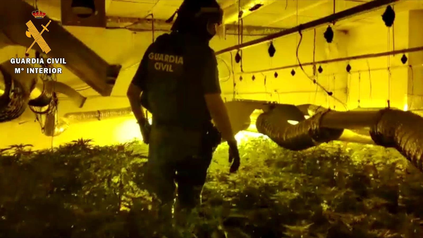 Hallan un centro de producción de marihuana debajo de los semisótanos de tres viviendas en Las Gabias