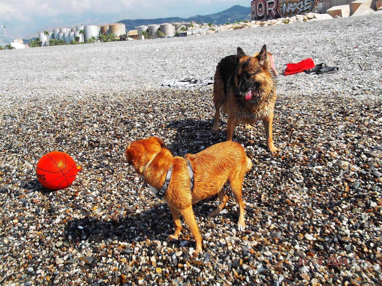 Motril mantendrá cerrada a perros su playa canina de forma temporal