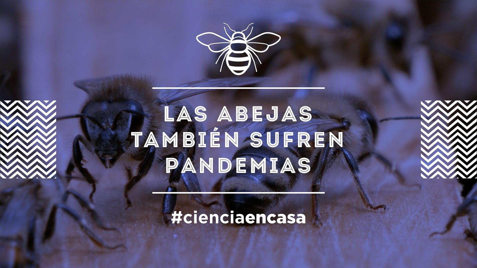 """El ciclo la #CienciaEnCasa de la UGR analiza """"Las abejas también sufren pandemias"""""""