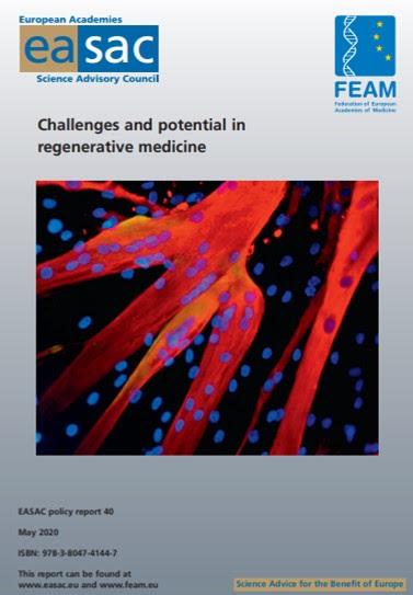 """Presentan un informe sobre  """"Retos y potencial de la medicina regenerativa"""""""
