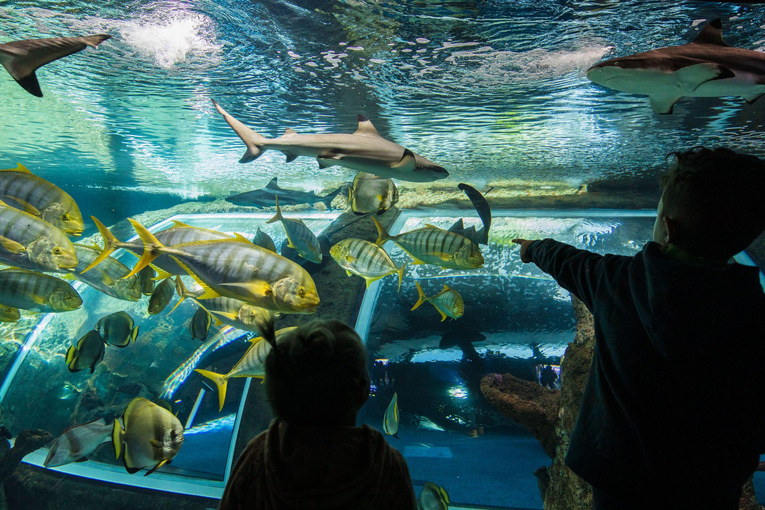 El CEIMAR y el Parque de las Ciencias de Granada se unen para impulsar la divulgación del mundo marino