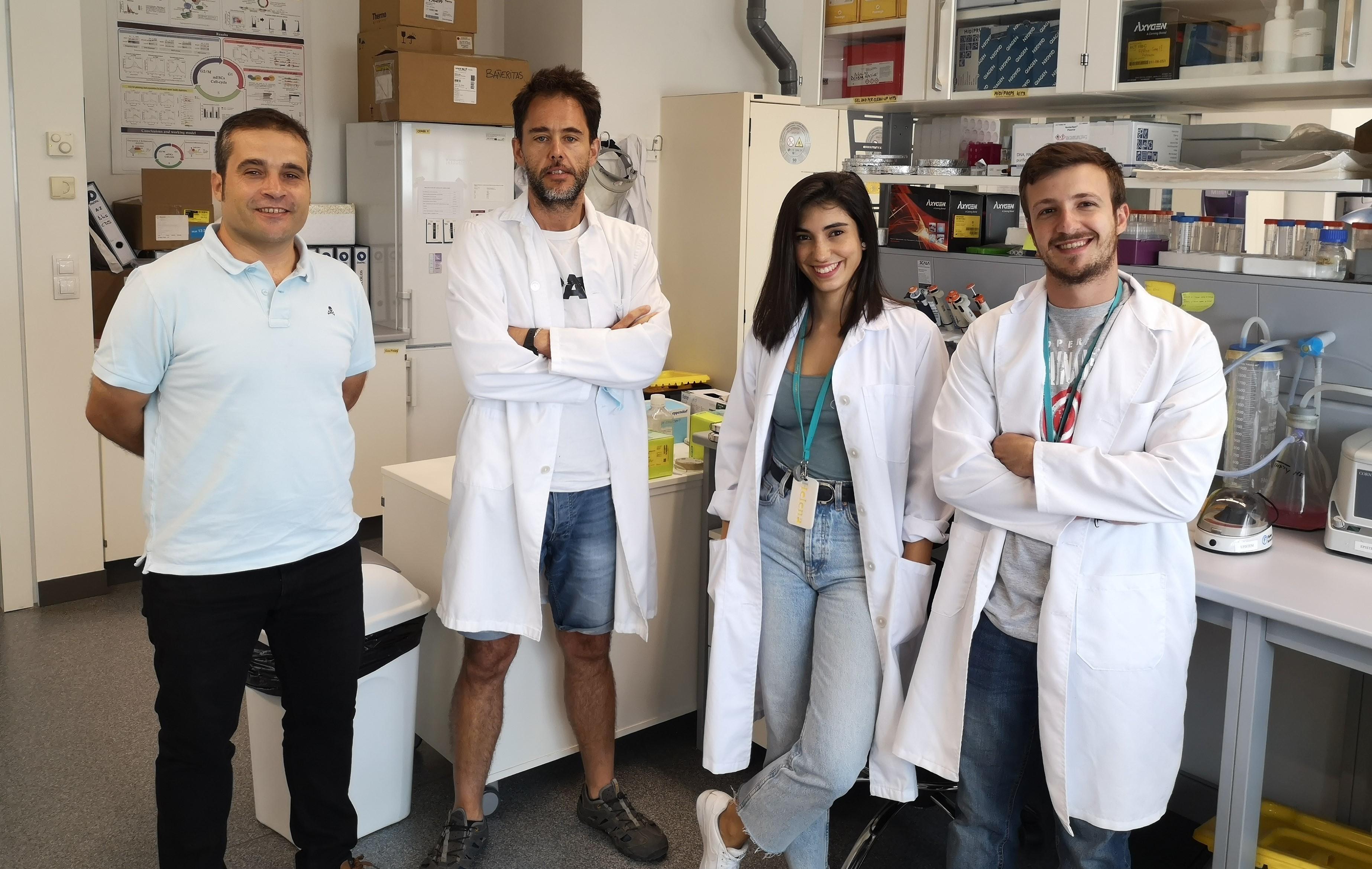 Revelan aspectos claves sobre la regulación de las células madre, capaces de transformarse en cualquier tejido del organismo
