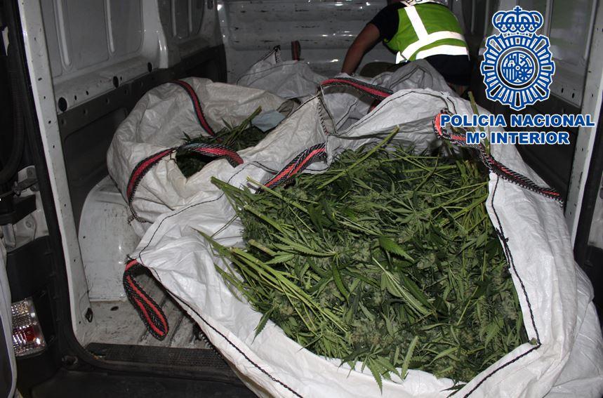 Desmantelados dos pisos dedicados al cultivo de marihuana incautando cerca de 430 plantas