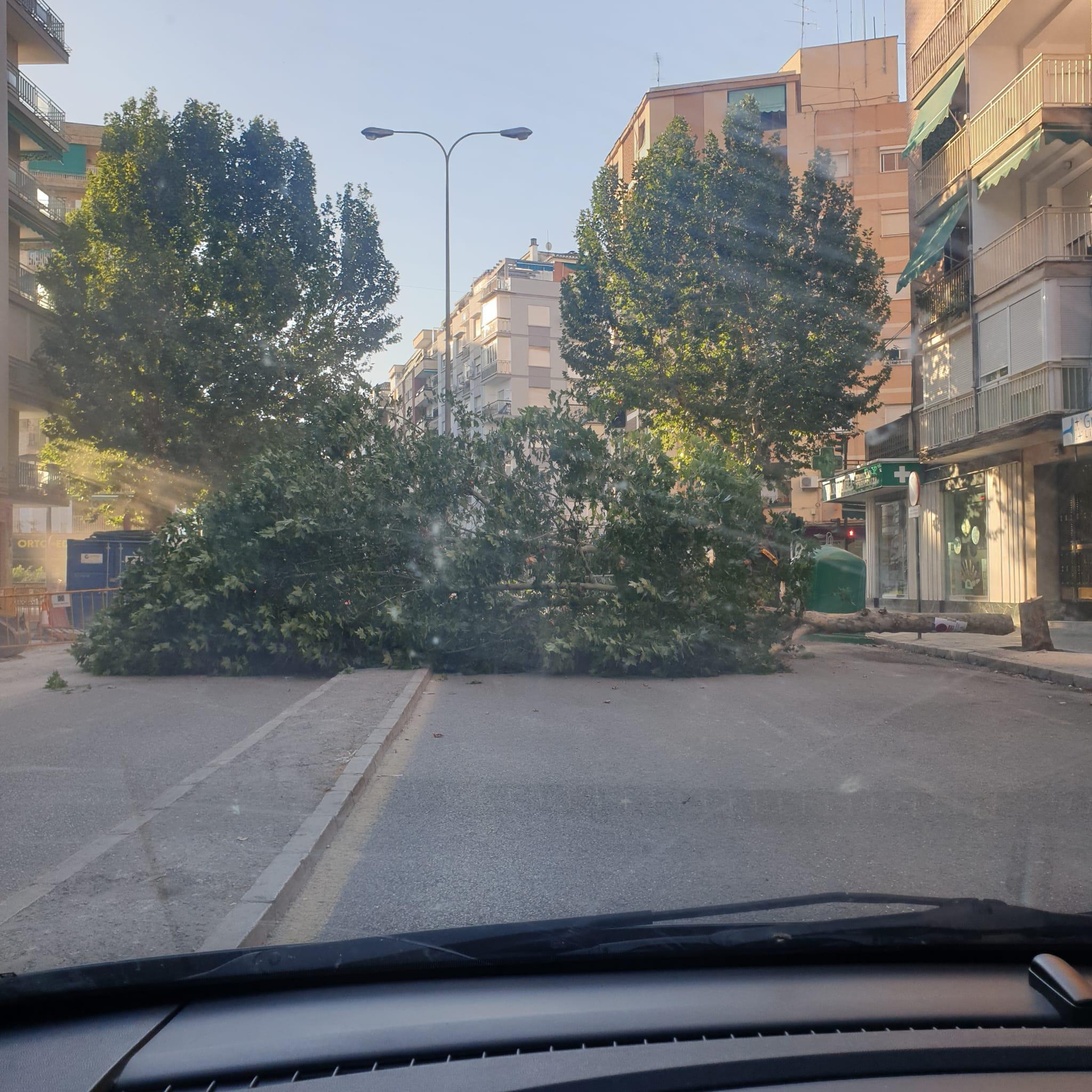 Nuevos Arboricios En La Avenida De Barcelona La Voz De Granada
