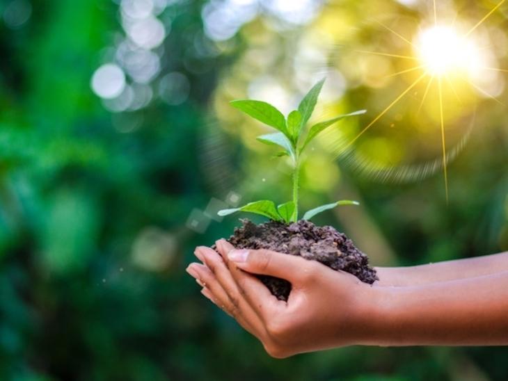 Bankia y CajaGranada Fundación lanzan la 'I Convocatoria de Medioambiente y Desarrollo Sostenible'