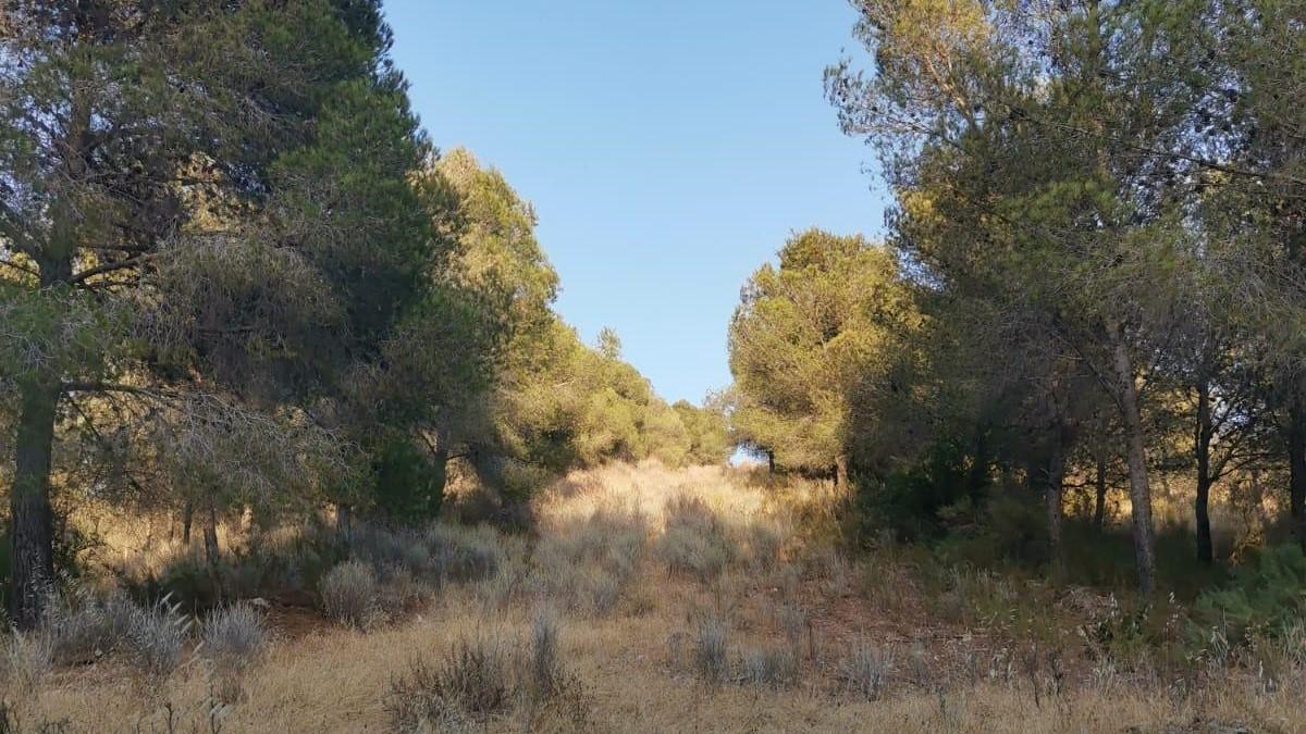 VOX exige una mayor limpieza y mantenimiento de los cortafuegos de las zonas forestales de Motril