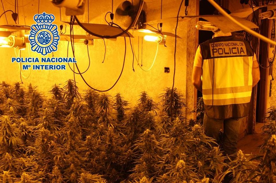 8 detenidos y 6.000 plantas de marihuana incautadas durante una operación policial en Cijuela