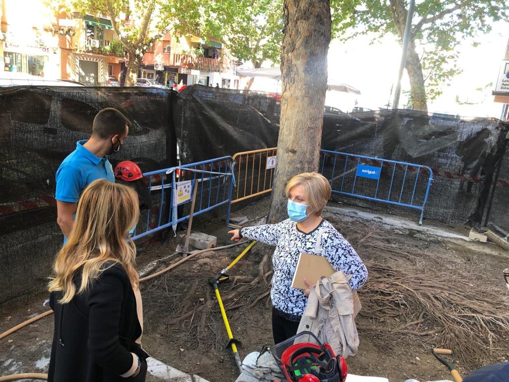 El Ayuntamiento prueba un nuevo método para la limpieza de las raíces de los árboles