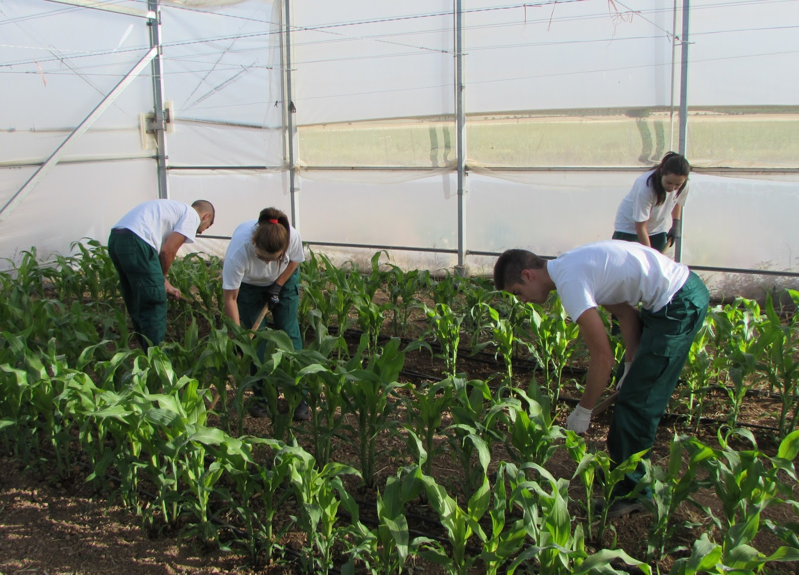 El PP plantea a Diputación que apruebe un plan de empleo en la Finca Los Morales de Huéscar