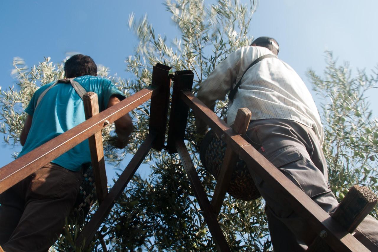 Editado un folleto dirigido a trabajadores y empresarios agrícolas con medidas para prevenir el COVID-19
