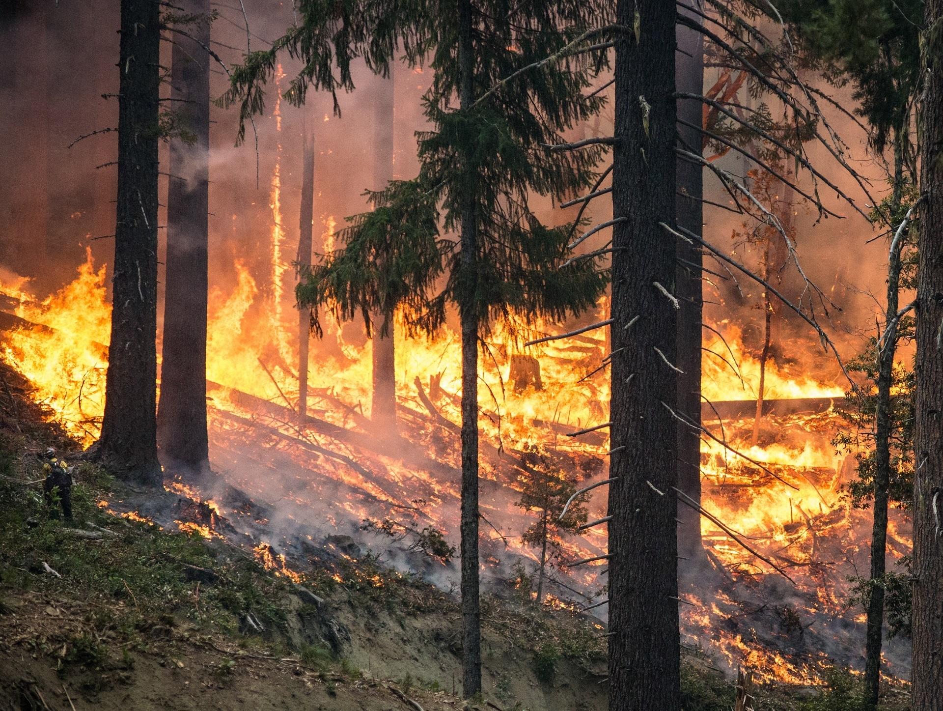 Expertos defienden la necesidad de incluir una base científica en los debates políticos para la gestión y control de los incendios forestales