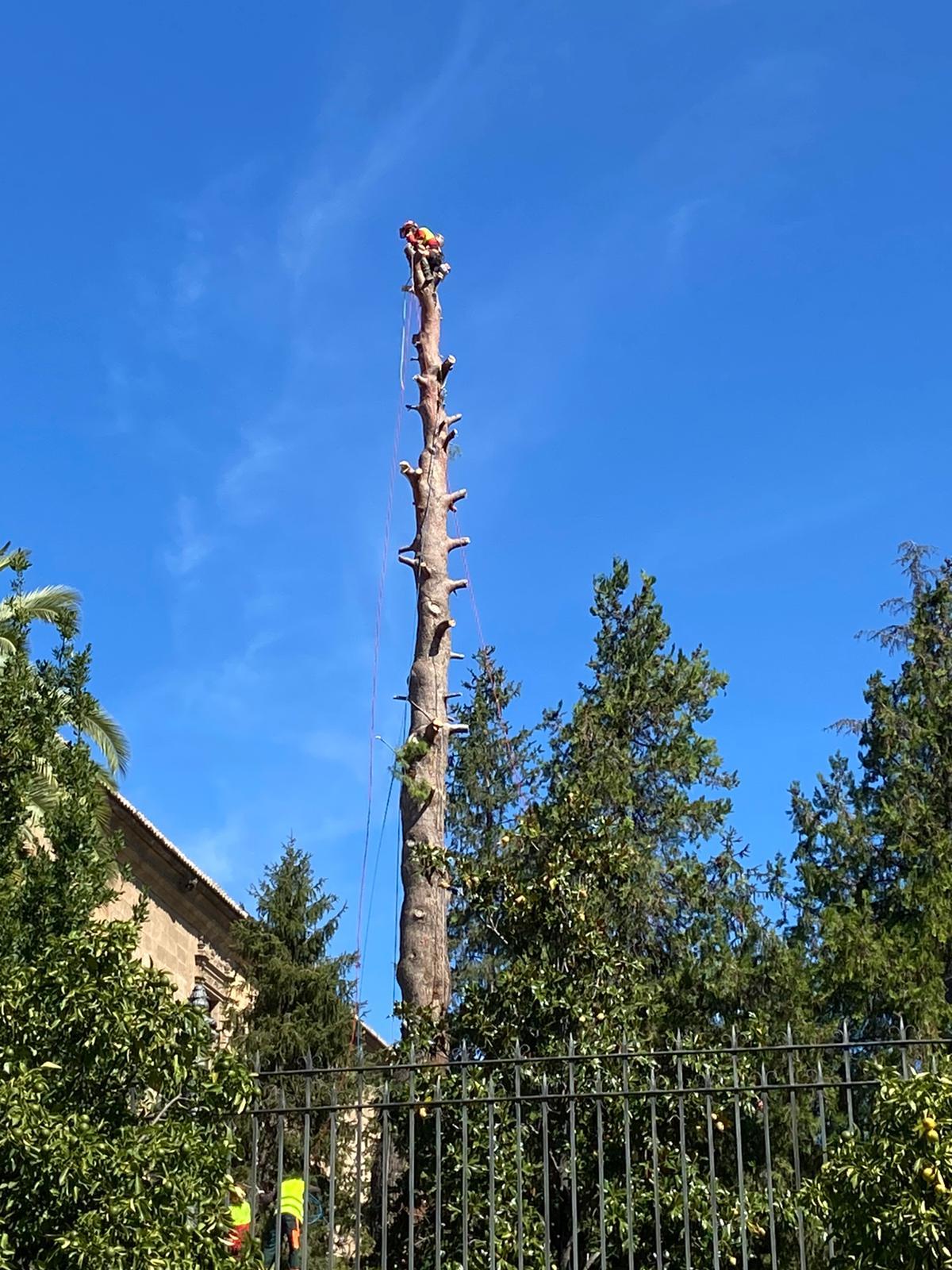 Podemos-IU exige al alcalde que pare la tala injustificada de árboles