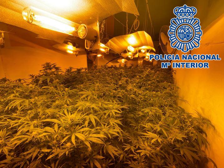 Detenido tras descubrir una plantación indoor de cannabis situada en el centro urbano de Motril