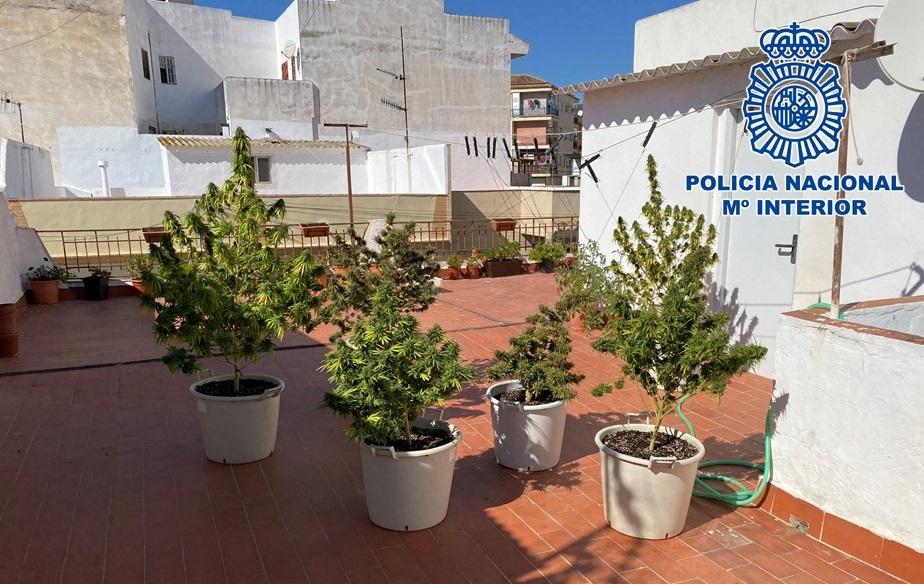 Decomisan 7 plantas de marihuana de una terraza que estaba cerca de un colegio