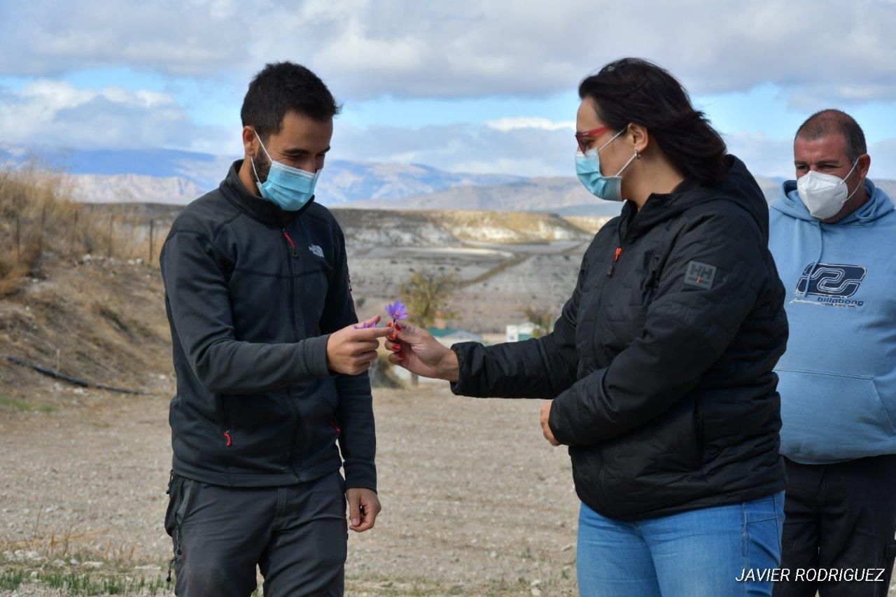 El municipio de Orce cuenta con la única explotación de azafrán de Andalucía