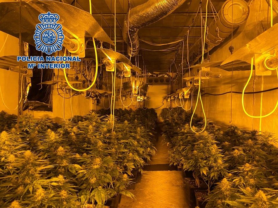 Localizadas 615 plantas de marihuana en una vivienda del centro de Dúrcal