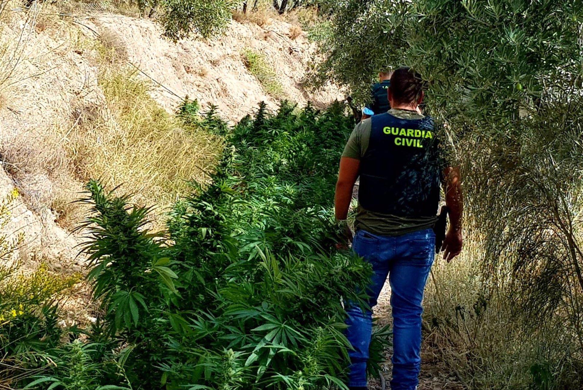 Desarticulada una organización a la que se atribuye el mayor centro de marihuana de la Alpujarra