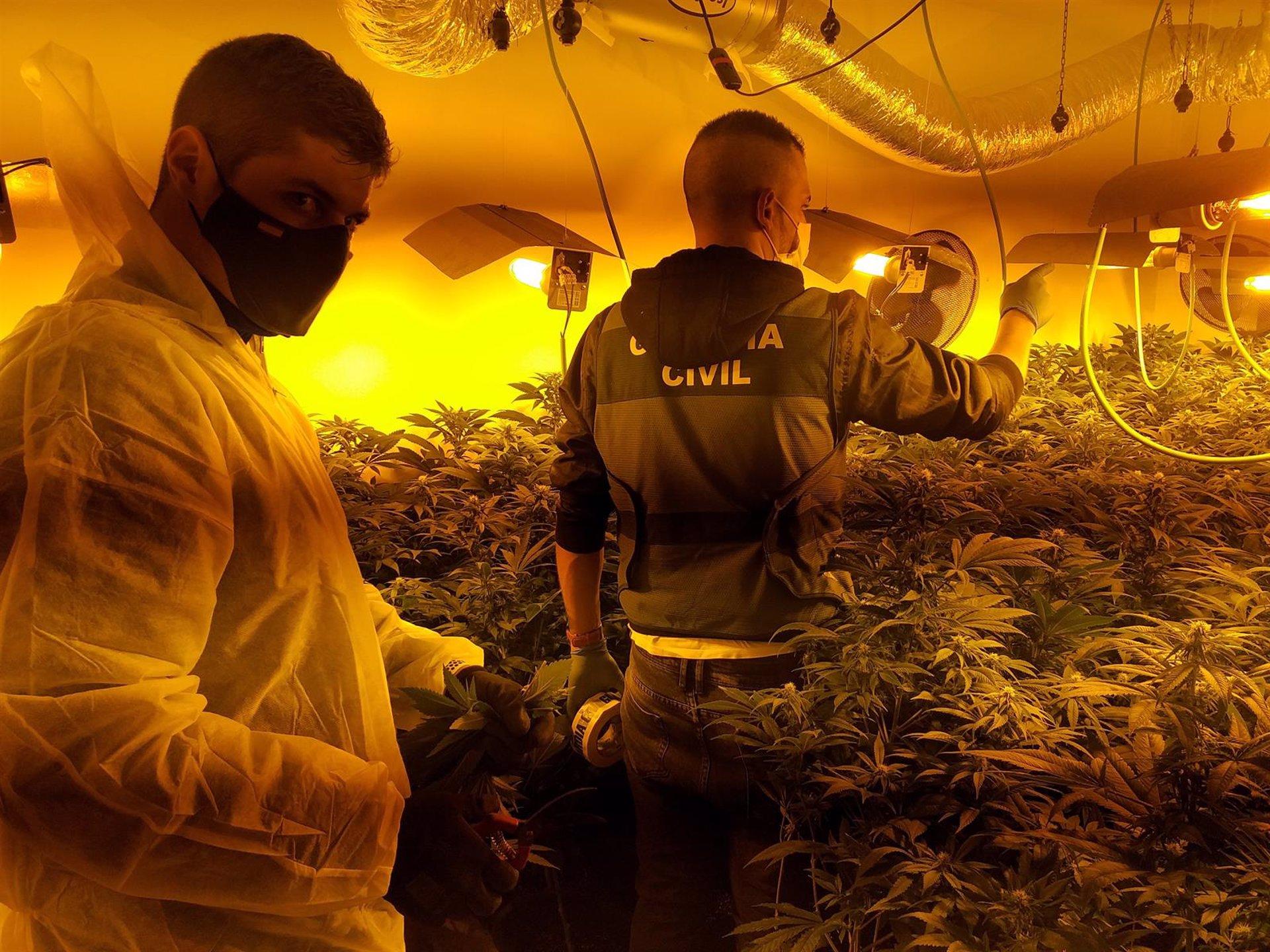 Desarticulada en Escóznar una red criminal de cultivo y elaboración de marihuana a gran escala