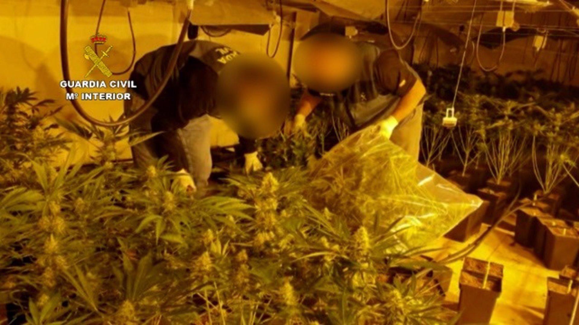 Treinta detenidos en la operación 'Castrum' contra la banda que distribuía marihuana a Europa