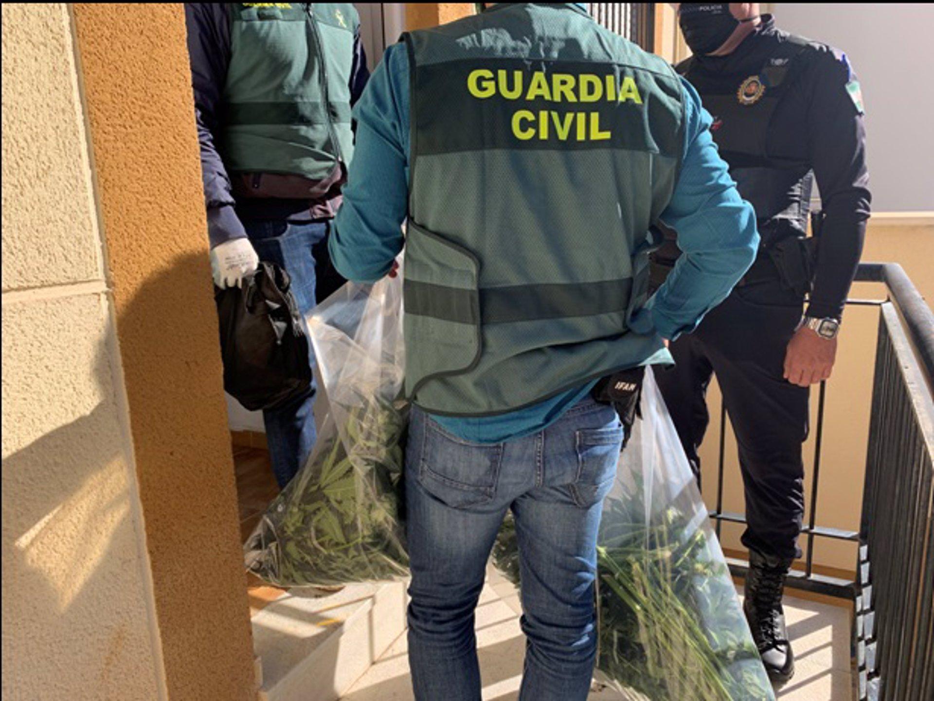 Incautadas más de 7.000 plantas de marihuana en la provincia en el mes de enero