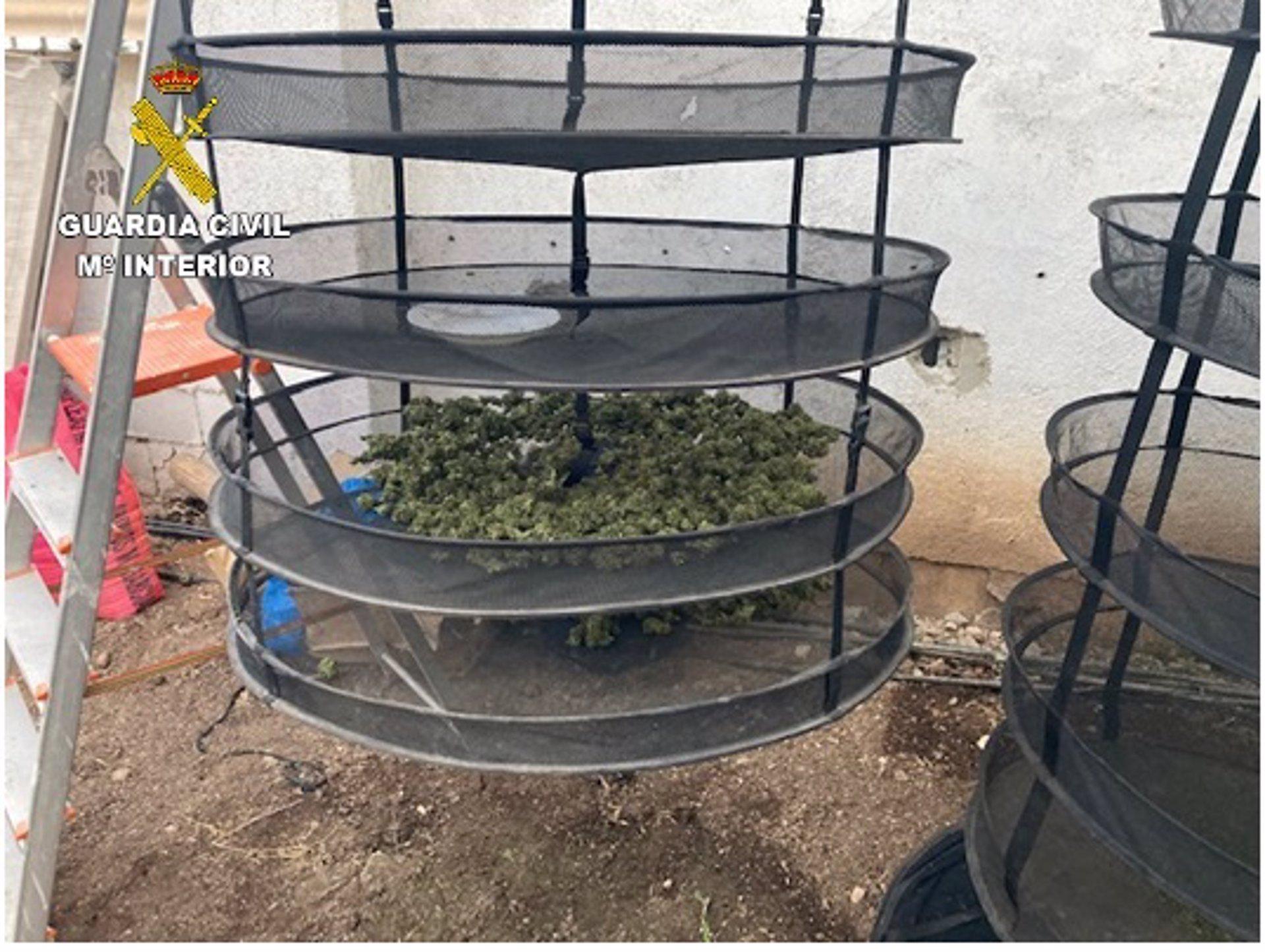 Más de siete mil plantas de cannabis incautadas por la Guardia Civil en noviembre