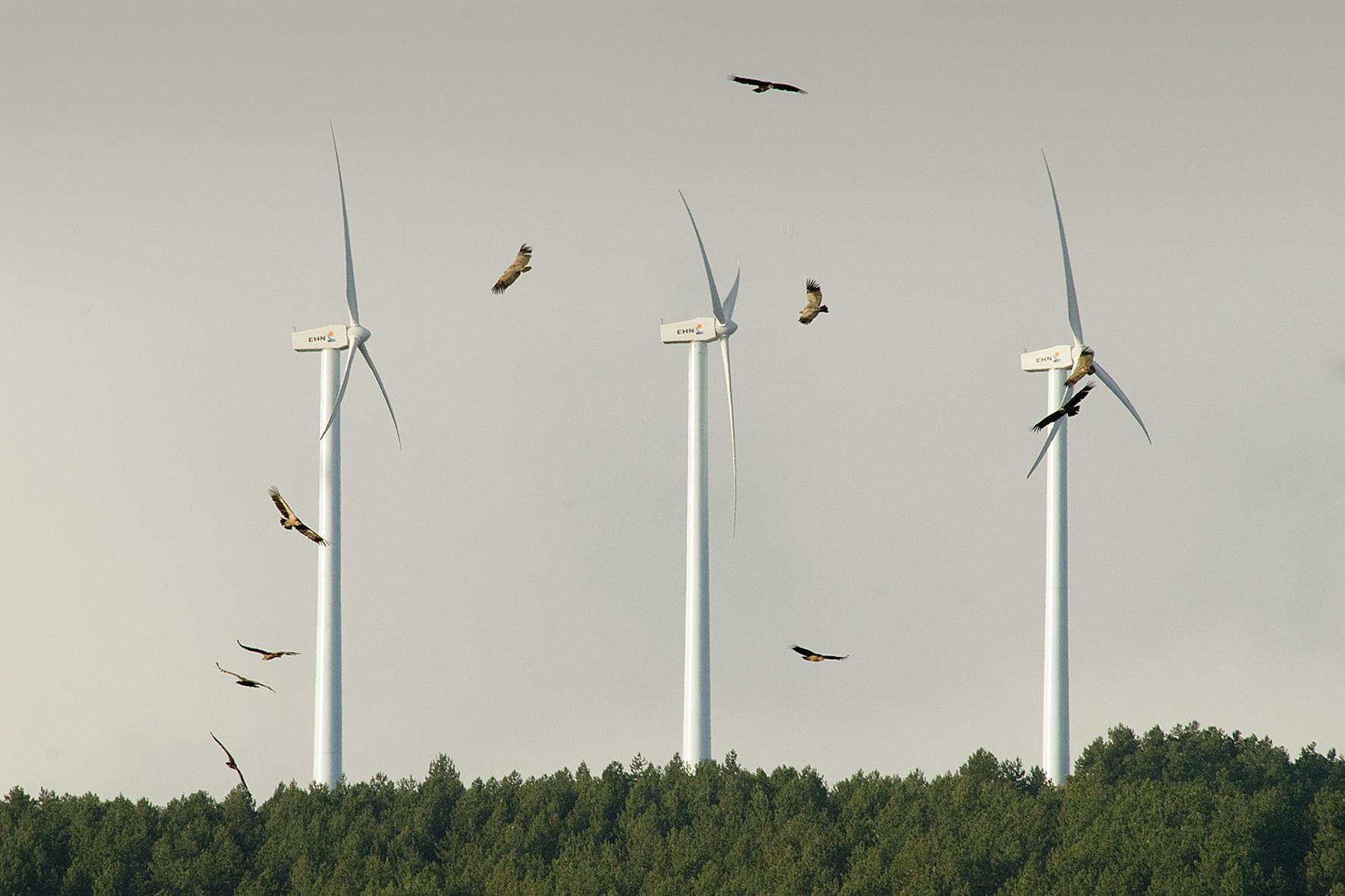El sector de las renovables invirtió 750 millones y creó 3.000 empleos en Andalucía en 2020