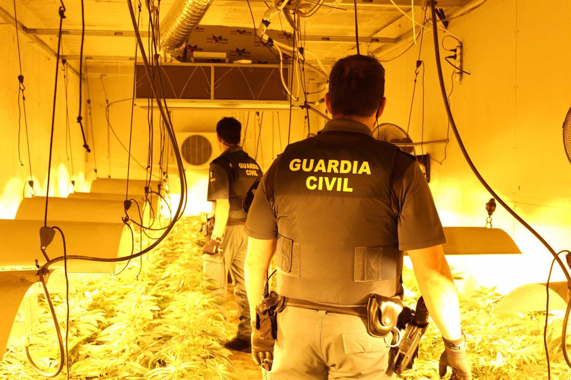 Intervienen 652 plantas de marihuana y una catana en tres intervenciones policiales