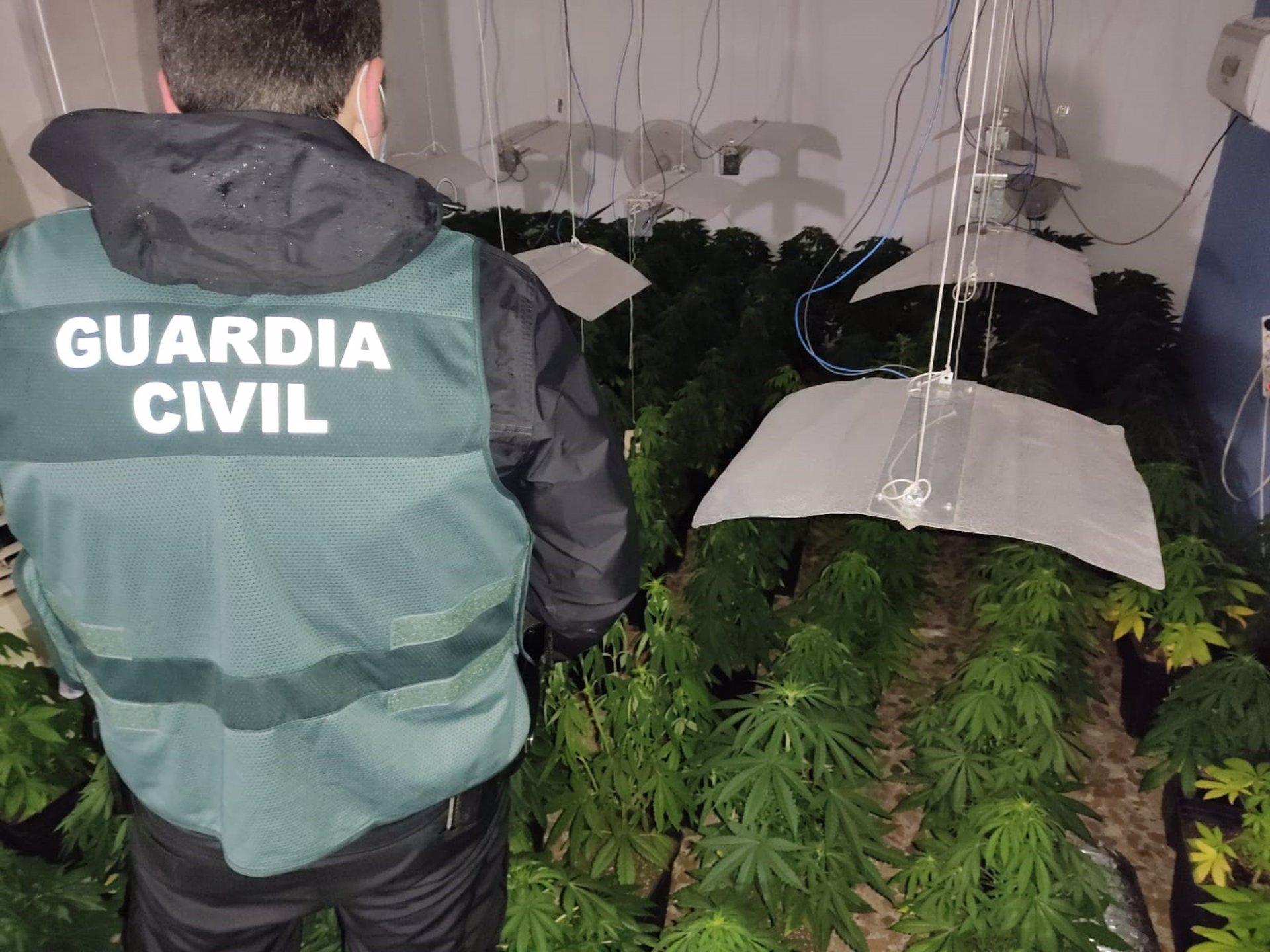 Desarticulados seis centros de producción de marihuana con 3.146 plantas y doce investigados