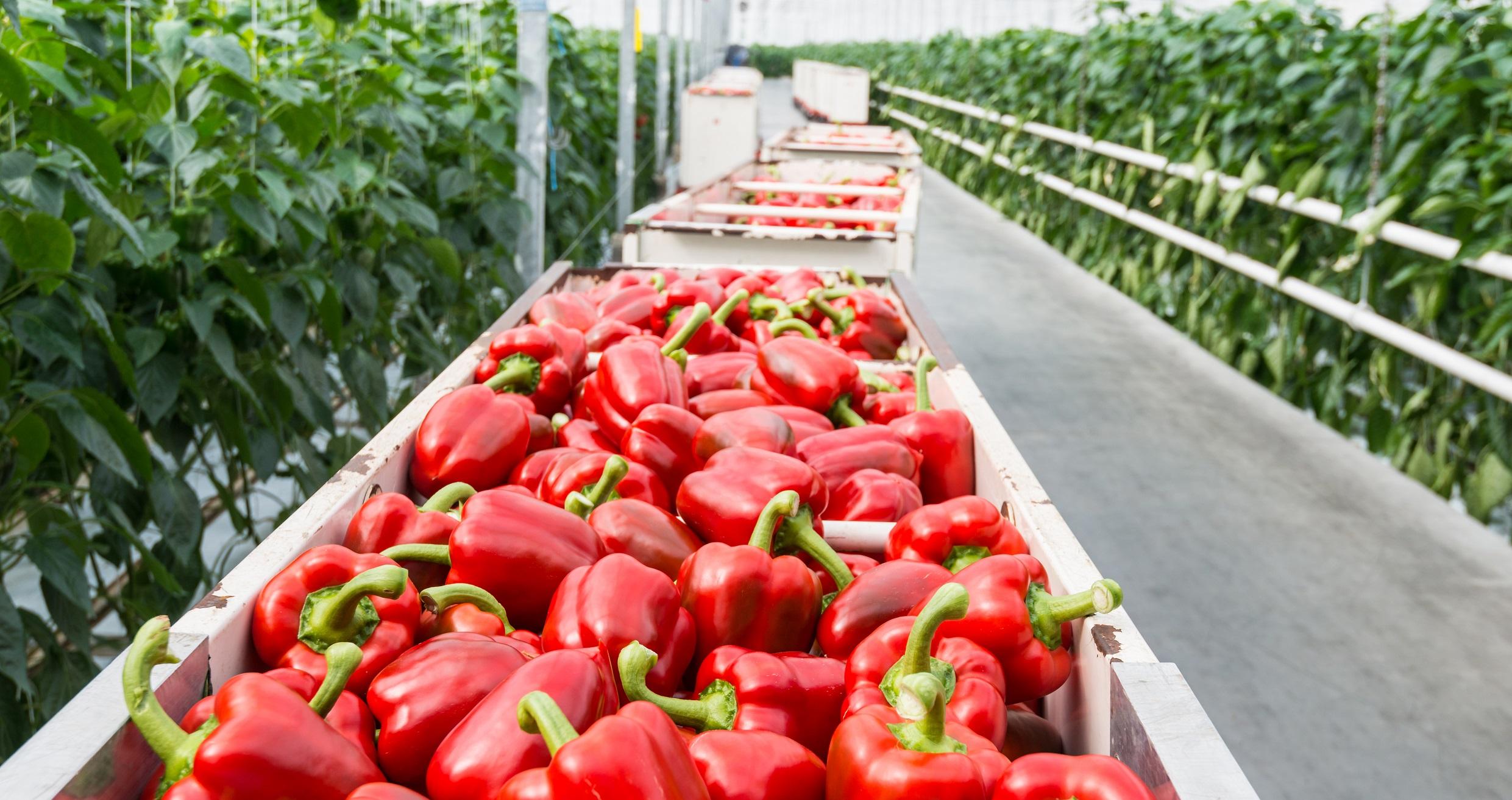 Las exportaciones agroalimentarias andaluzas suponen el 21,4% de las españolas de enero a noviembre de 2020