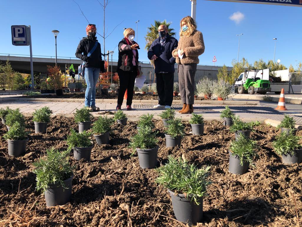 Mejoran el arbolado y zonas verdes de dos espacios de la capital