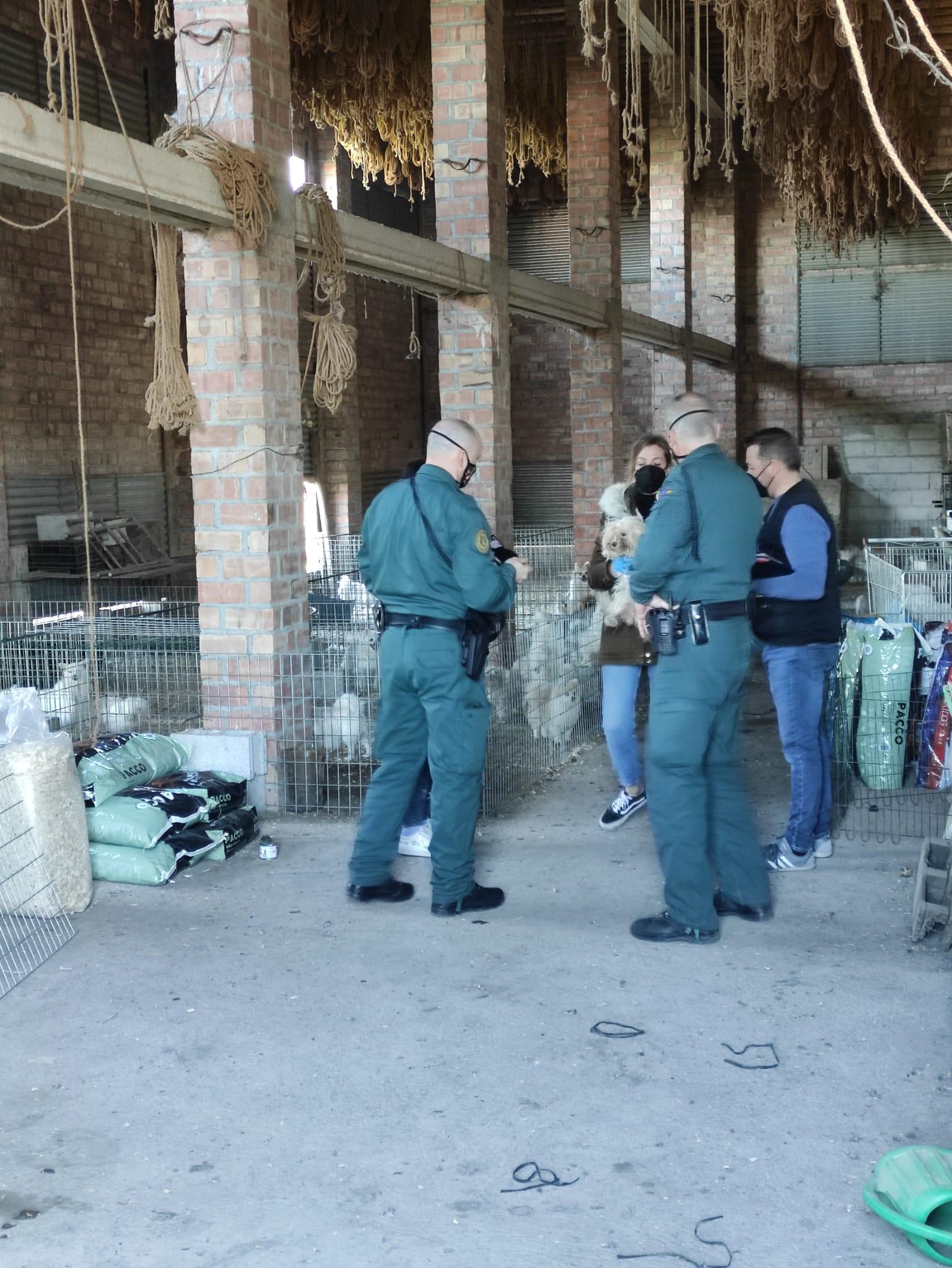 Los perros del criadero ilegal de Vegas del Genil son entregados a seis protectoras de animales para que los cuiden
