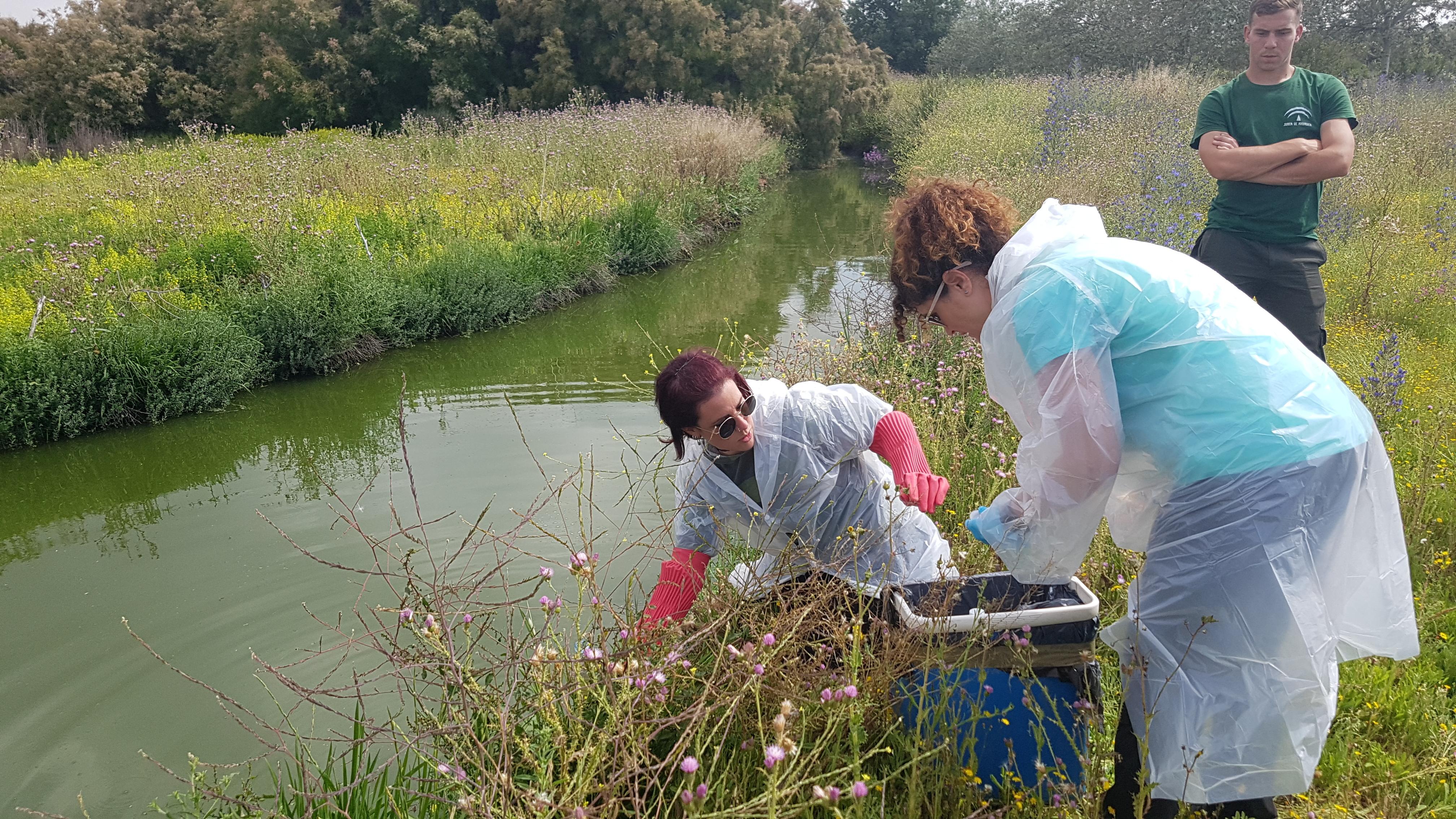 Ecólogos de la UGR demuestran la eficiencia de un nuevo método para mejorar la calidad de las aguas residuales tratadas