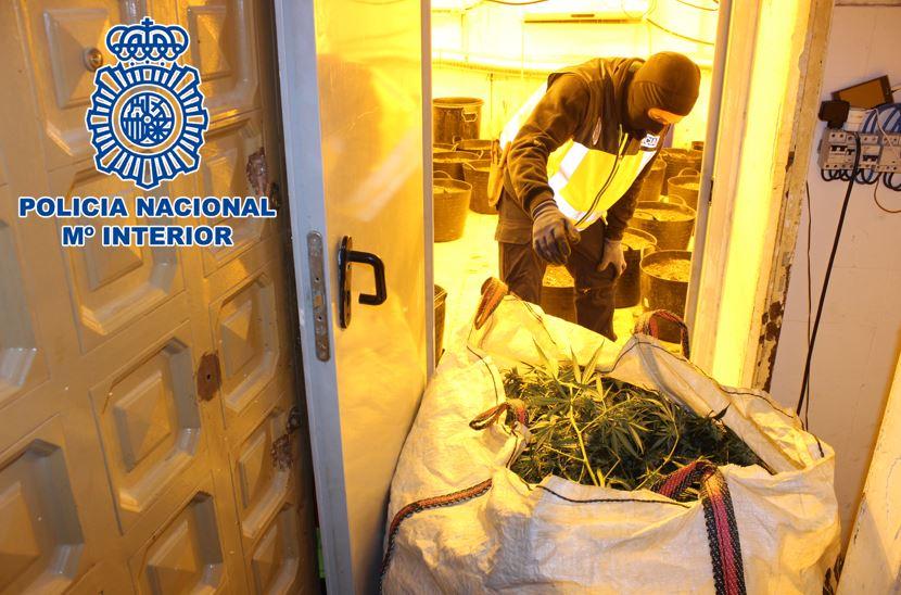 La operación policial contra el «Hotel Luz» interviene 5.760 plantas y 12 kilos de cogollos de marihuana