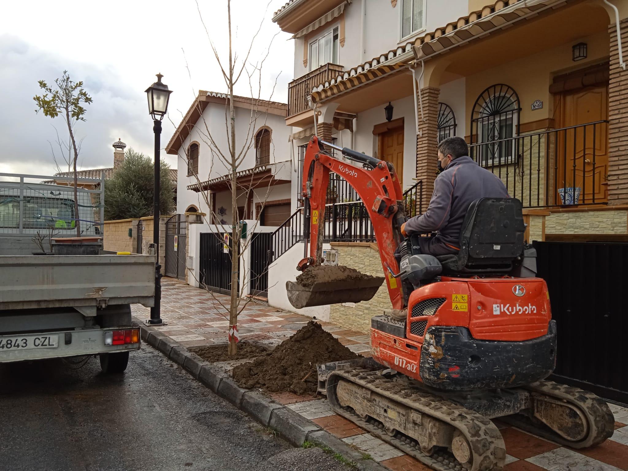 El Ayuntamiento de Cúllar Vega planta más de 60 árboles en distintos puntos del municipio