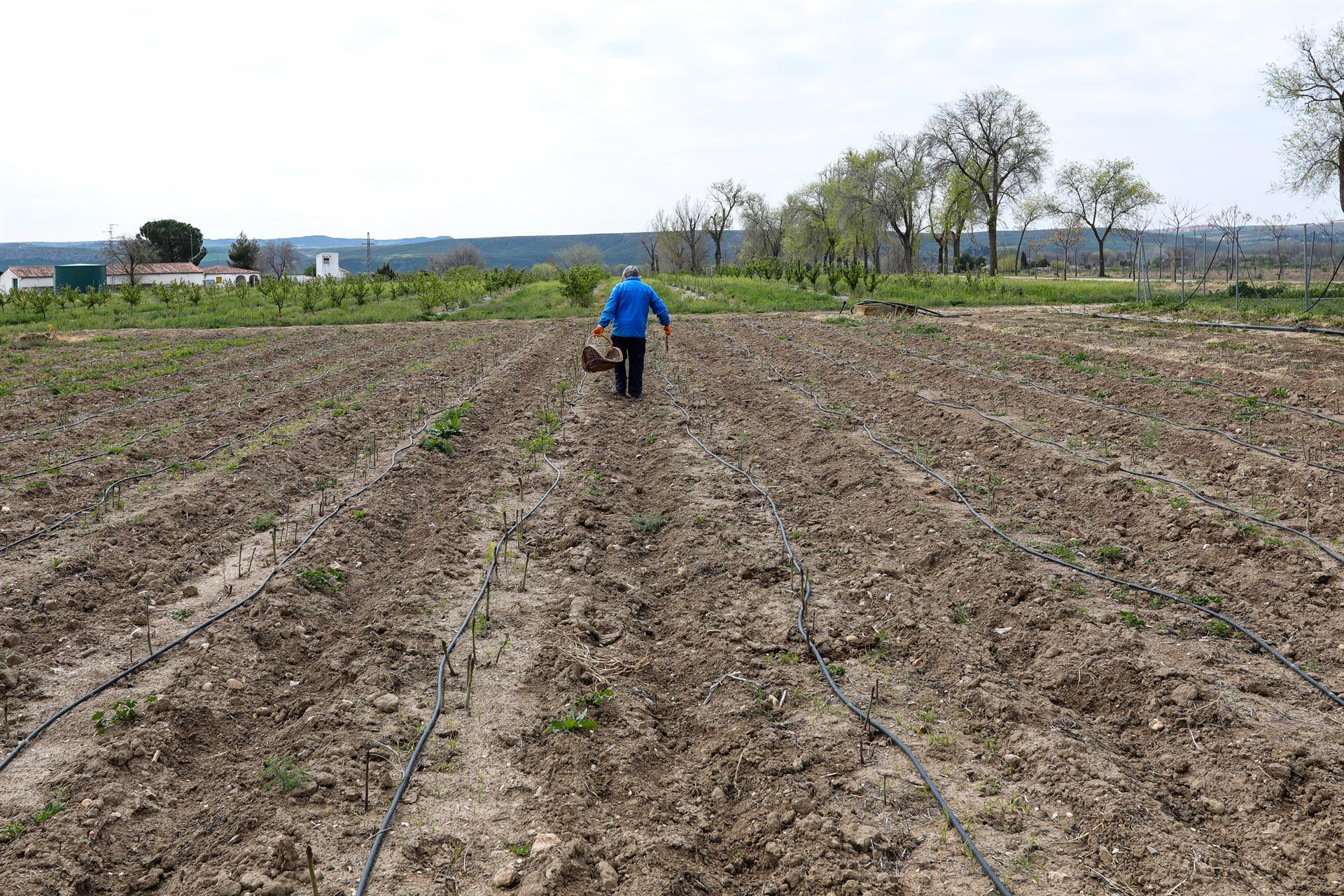 Unos 680.000 agricultores y ganaderos podrán solicitar desde el 1 de febrero las ayudas directas de la PAC