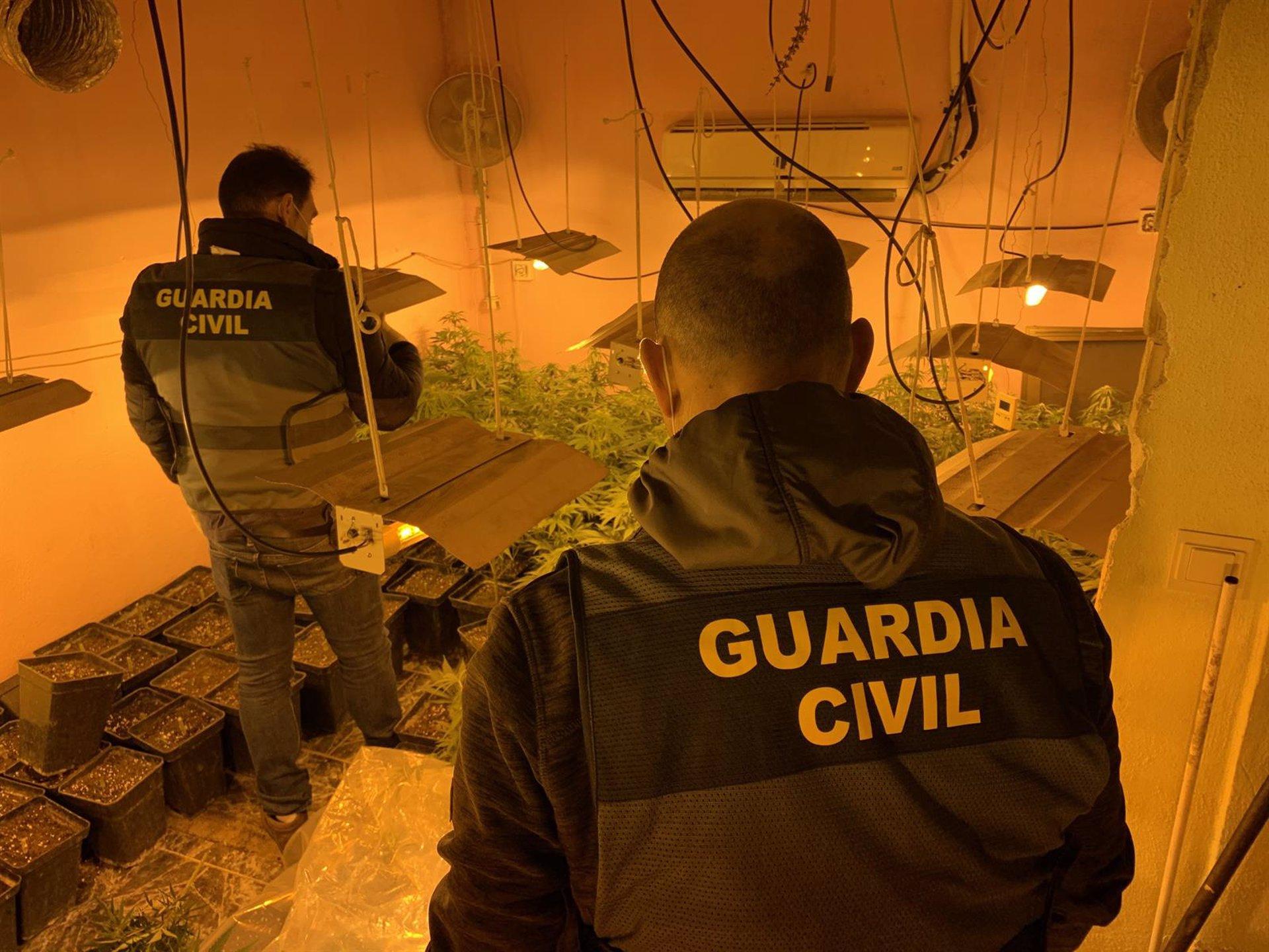 Desarticulados tres centros de producción de marihuana con un millar de plantas