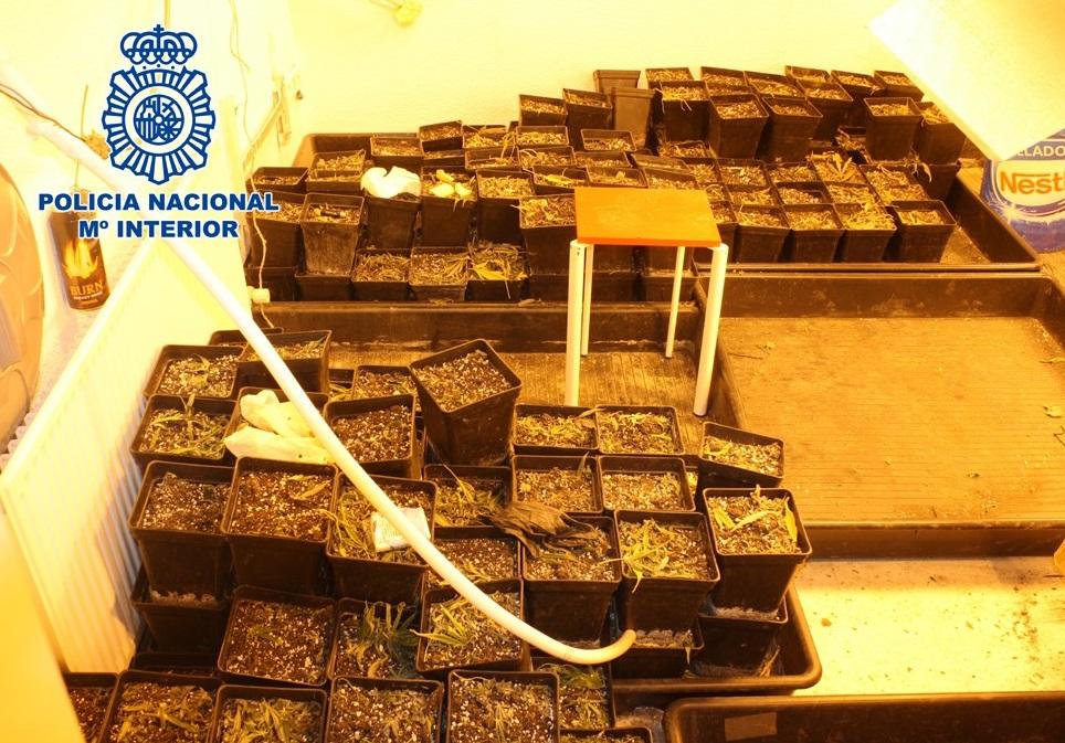 Descubierta una plantación de marihuana en un piso de Lancha del Genil y se incautan más de 330 plantas