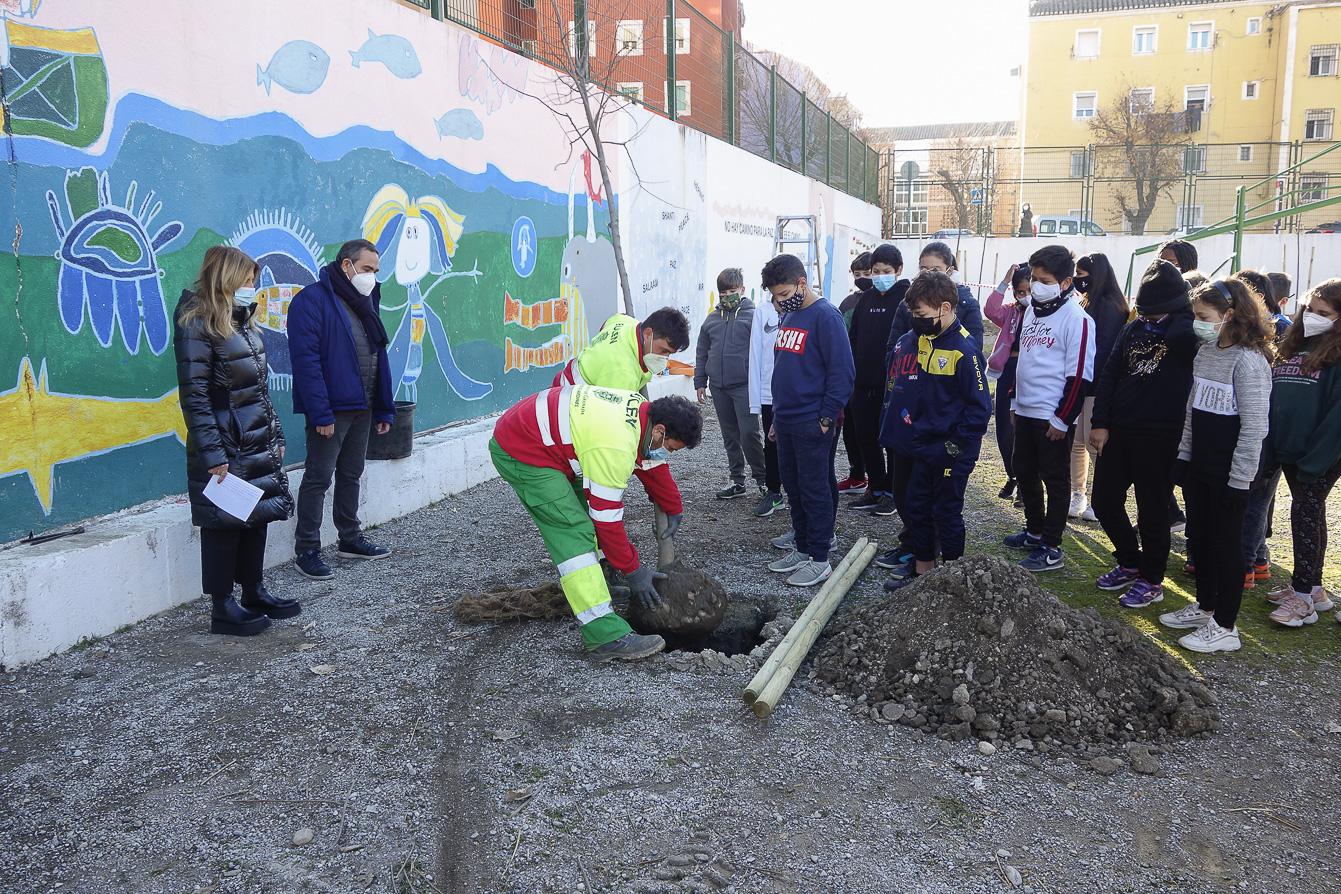 El Ayuntamiento plantará 693 árboles en Granada entre octubre y marzo