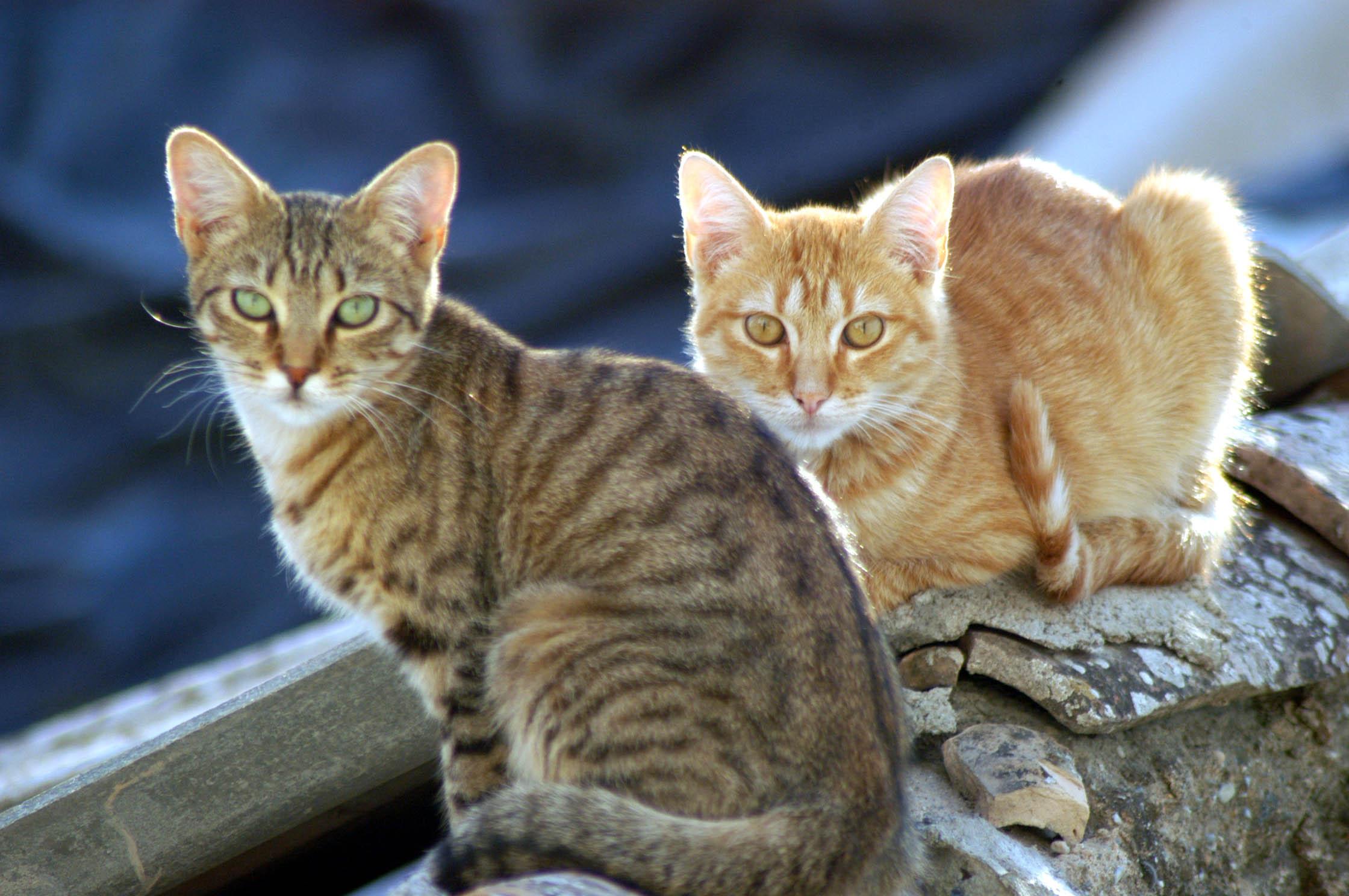 Diputación destina más de 65.000 euros a la protección y cuidado de animales en los municipios de la provincia