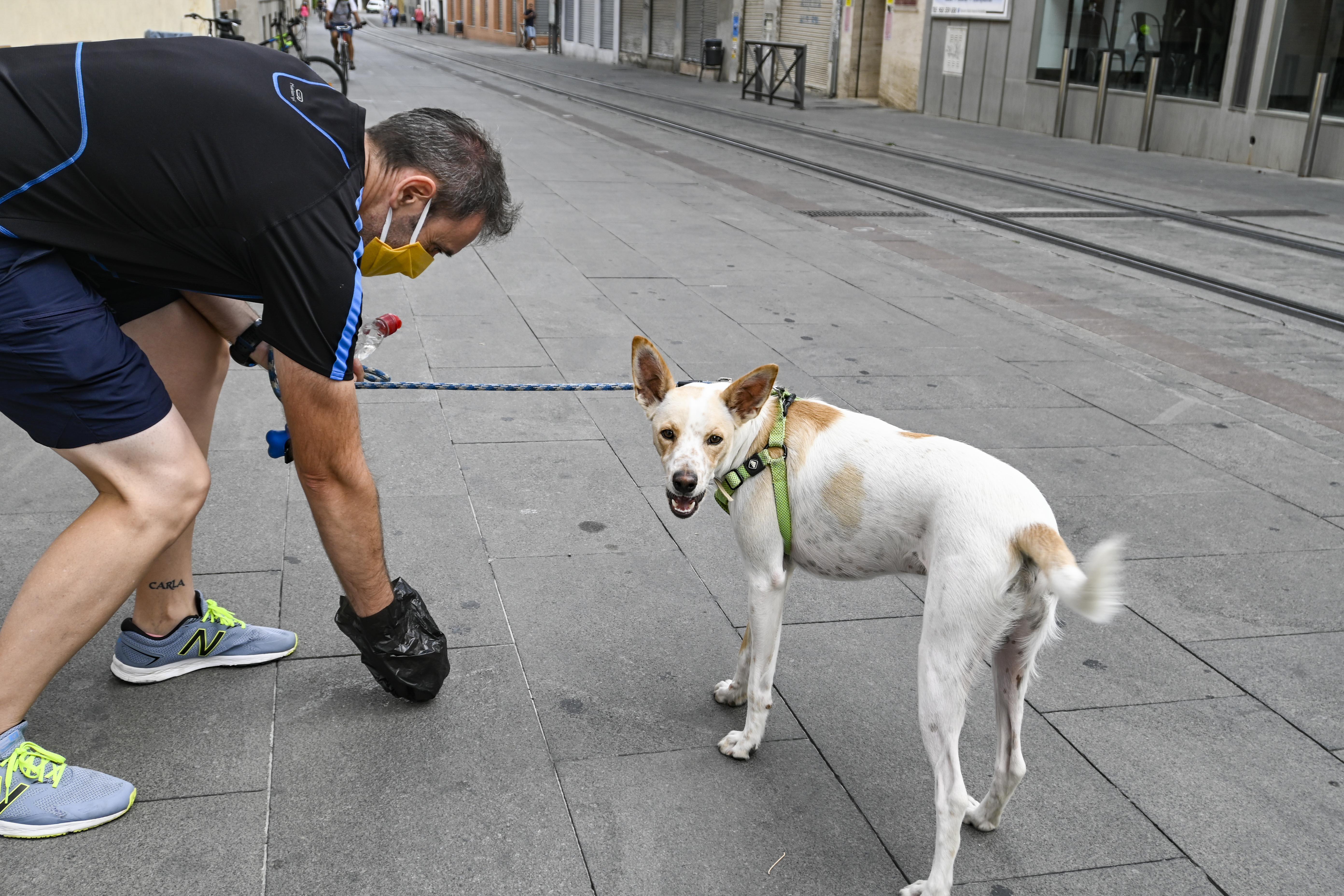 El Ayuntamiento de Armilla implantará un registro de ADN canino