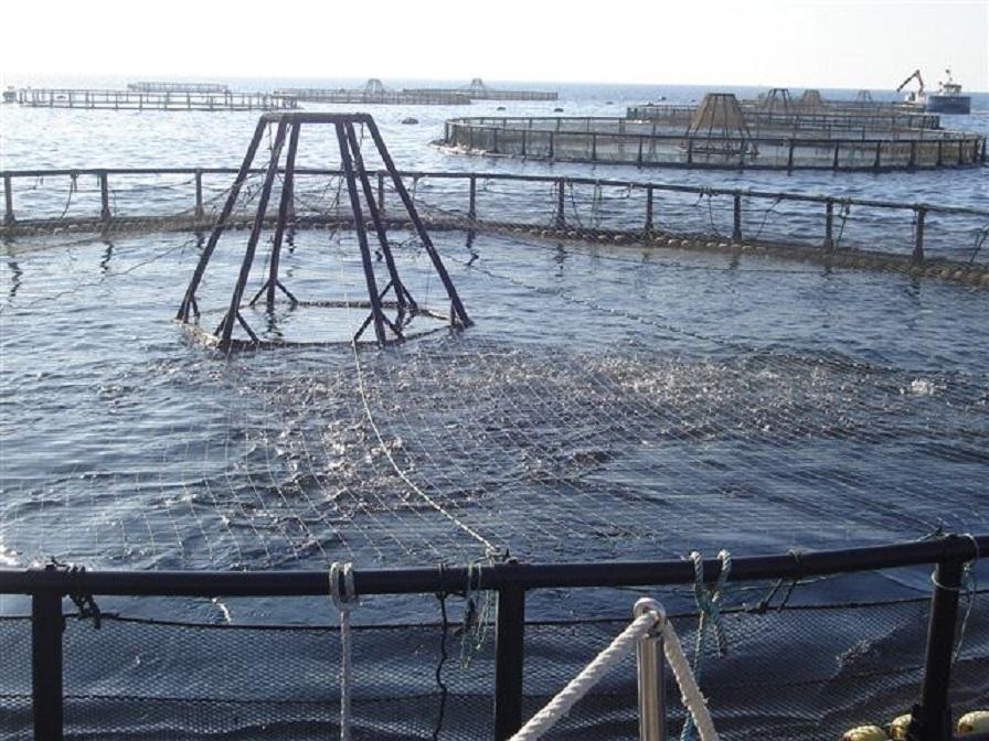 Agricultura y Pesca anuncia nuevas ayudas a la acuicultura andaluza afectada por la Covid-19