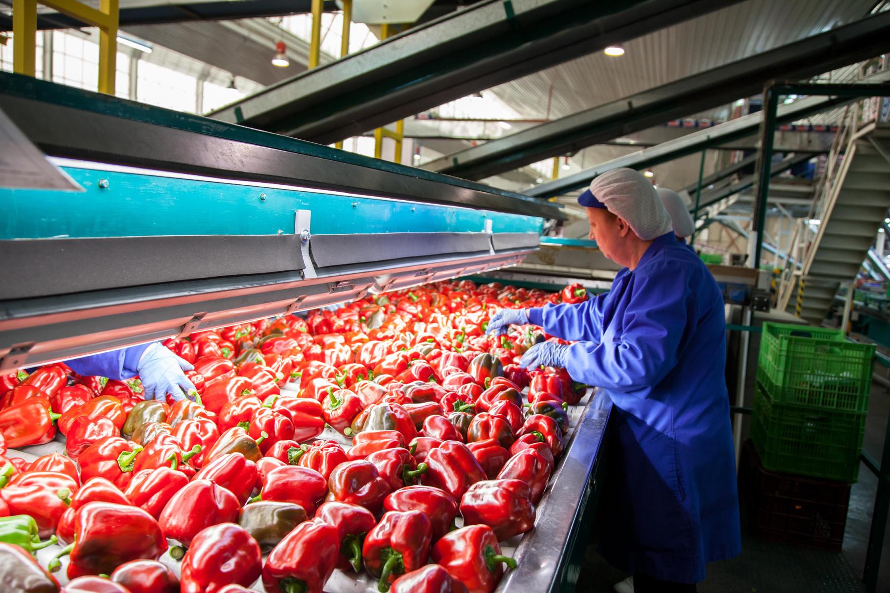 Andalucía bate su récord en exportaciones agroalimentarias en 2020 con 11.255 millones de euros