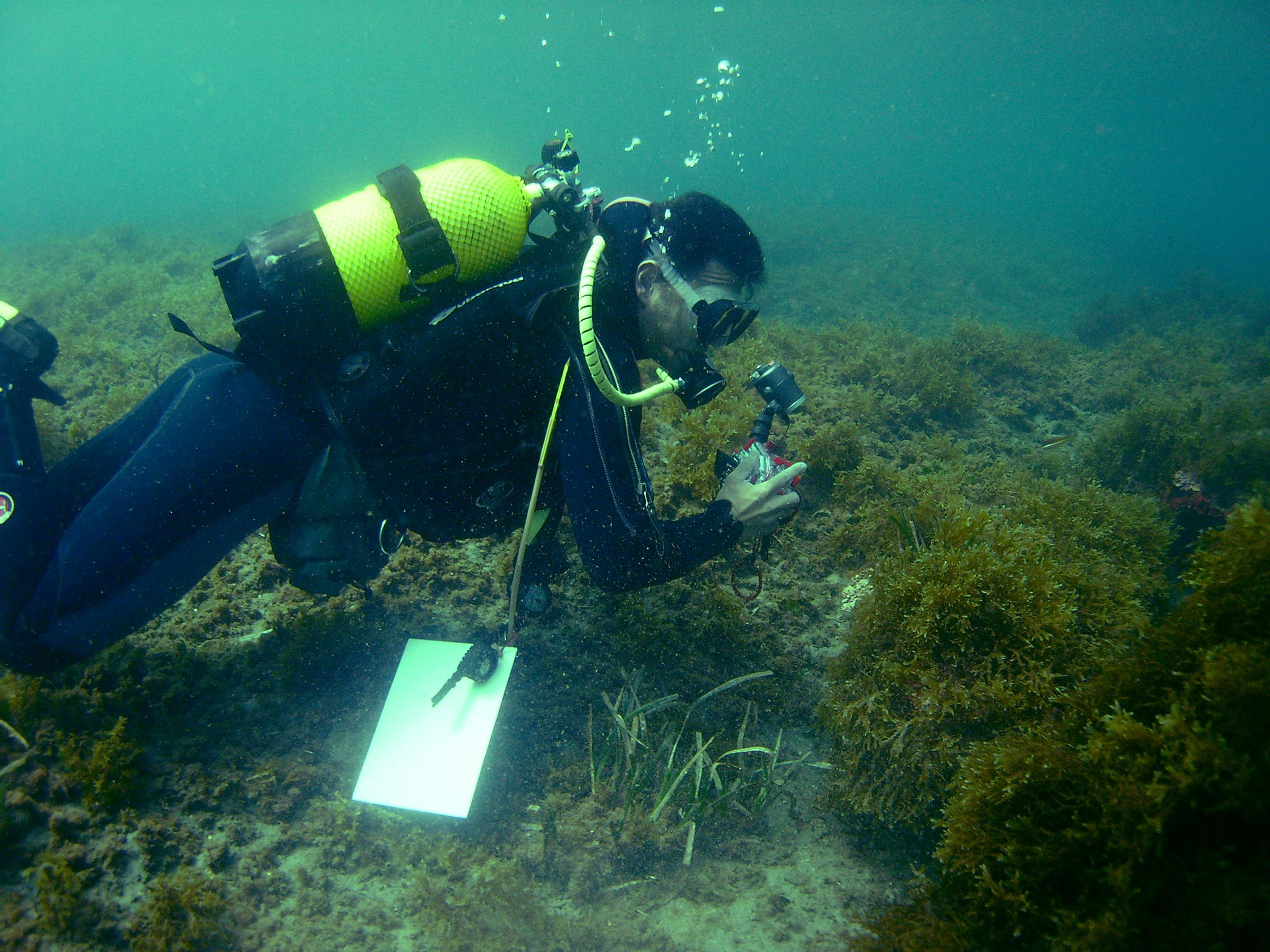 La UGR participa en un estudio para ayudar a prevenir y controlar la expansión del alga asiática