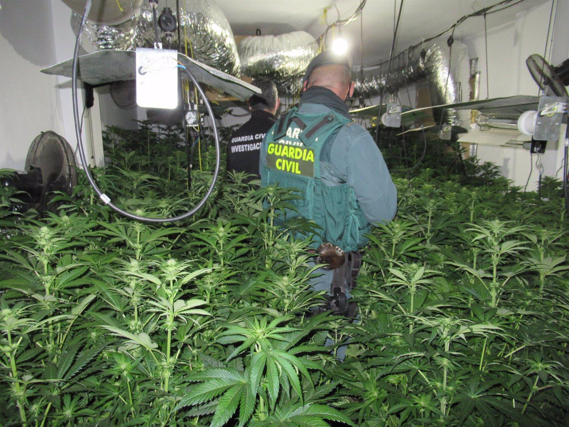 Desarticulan cuatro centros de producción de marihuana en Santa Fe
