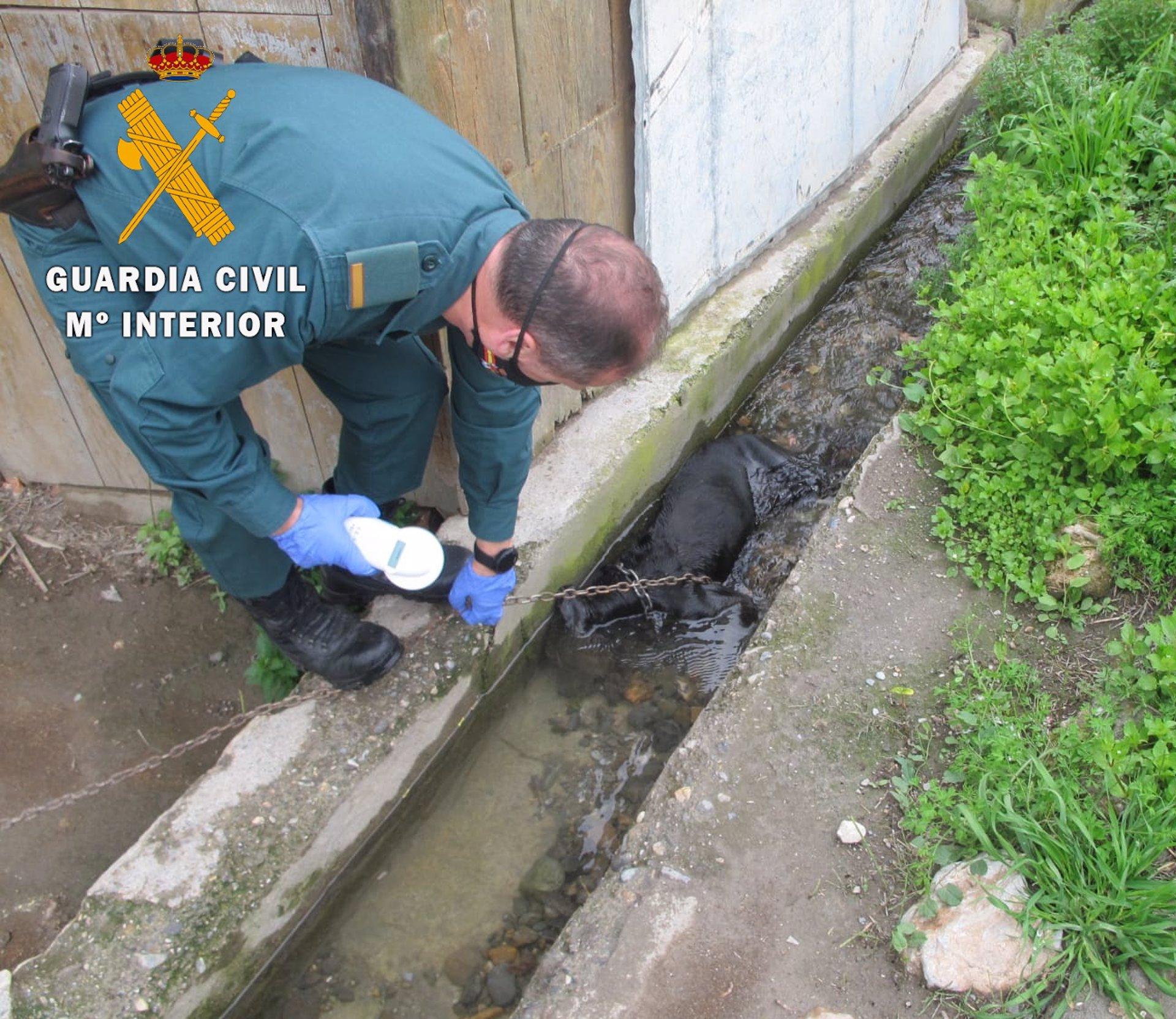 Investigado por el abandono de su perro, que apareció ahogado en Vélez de Benaudalla